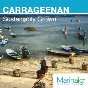 carrageenan sustainably grown